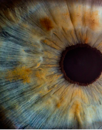 Zoomed in image of an iris
